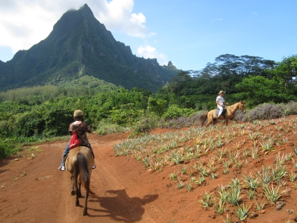 Horse riding on Moorea - photo by Rob McFarland