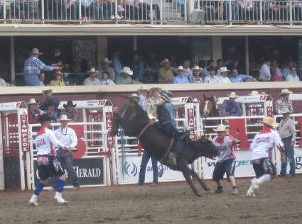 Bull riding at Calgary Stampede - photo by Rob McFarland