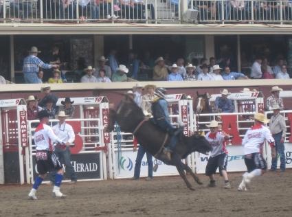 Bull riding at Calgary Stampede - photo by Rob McFarland