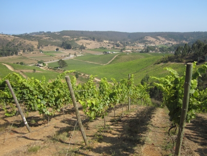 Casa Marin vineyard near Santiago - photo by Rob McFarland