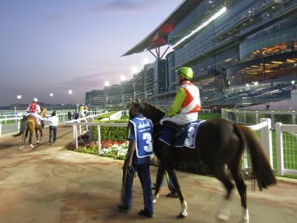 Racehorse at Meydan Park, Dubai - photo by Rob McFarland