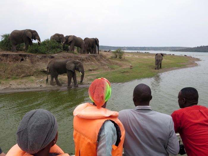 Elephants in Queen Elizabeth National Park, Uganda - photo by Rob McFarland