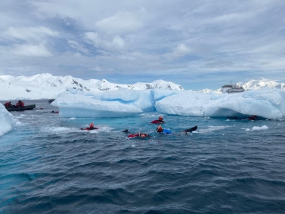 Polar snorkelling in Antarctica - photo by Aurora Expeditions